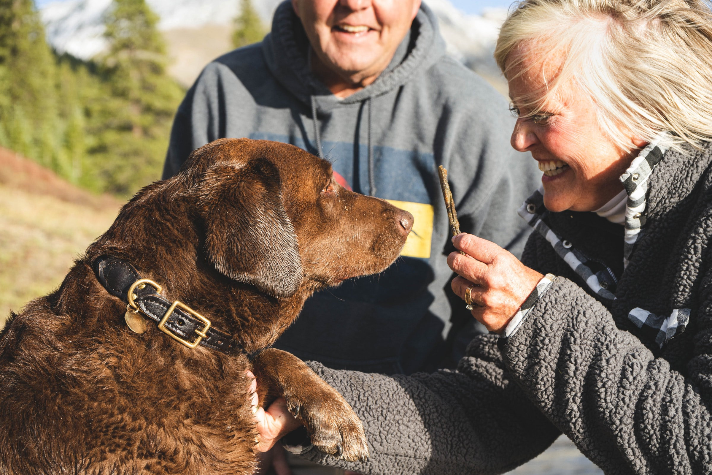 Treatment of Therapy dogs Service